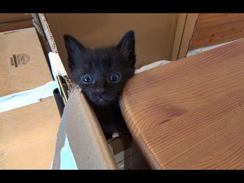 Jupiter Escapes The Kitten Pen Again!