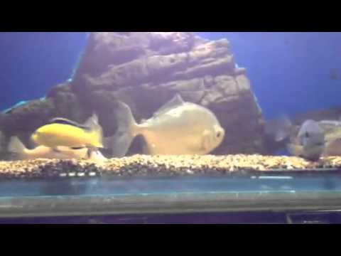 Here is what a tank of sleeping fish look like youtube for How do fishes sleep