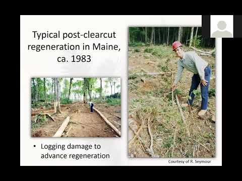 A Cross-Border Examination of the Silviculture of Spruce Mixedwoods