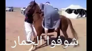 شوفو الفرس يرفض ان يحمل صاحبه و الحمار يضحك عليهما