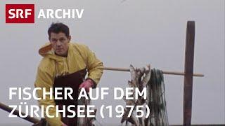 Fischer auf dem Zürichsee | Berufsporträt Fischer | SRF Archiv