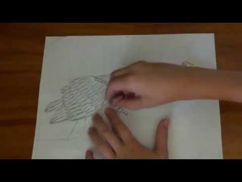 How to draw a Philippine Eagle (Monkey Eating Eagle)