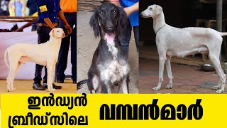 INDIAN BREEDS CHAMPION DOGS I DOG FARMING KERALA I PURE INDIAN DOGS
