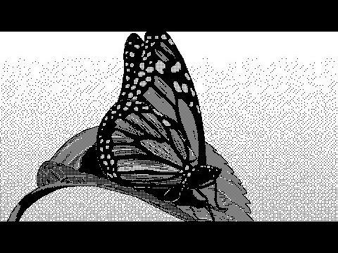 Гифка с бабочкой на фото