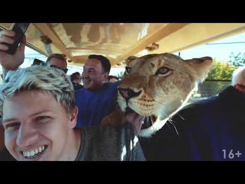 Экскурсия в сафари парк Тайган  Парк львов Тайган в Крыму  Олег Зубков и его львы
