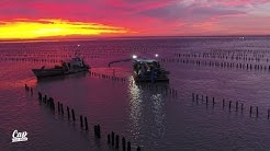 Cap Sud Ouest: Charente Maritime, les paysans de la mer (replay)