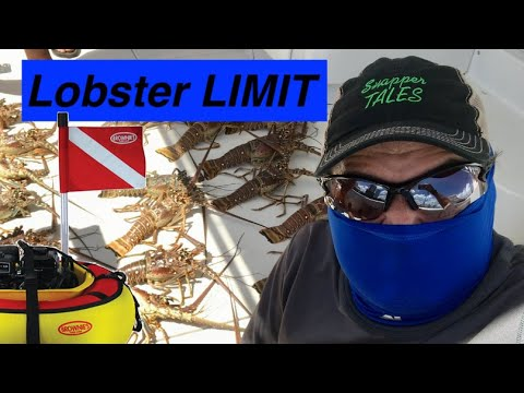 Download LOBSTER LIMIT with Brownie's Third Lung- Florida Mini-Season - Ep 7