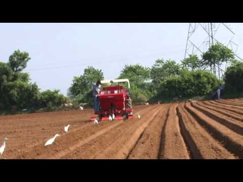 Tiger Potato Planter   2 Row