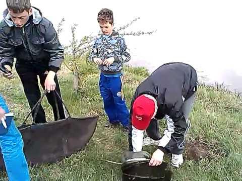 Filmulete Pentru Pescari. Crapi De 7,1 - 3,4 - 1,0 Kg Pe Balta SOLACOLU