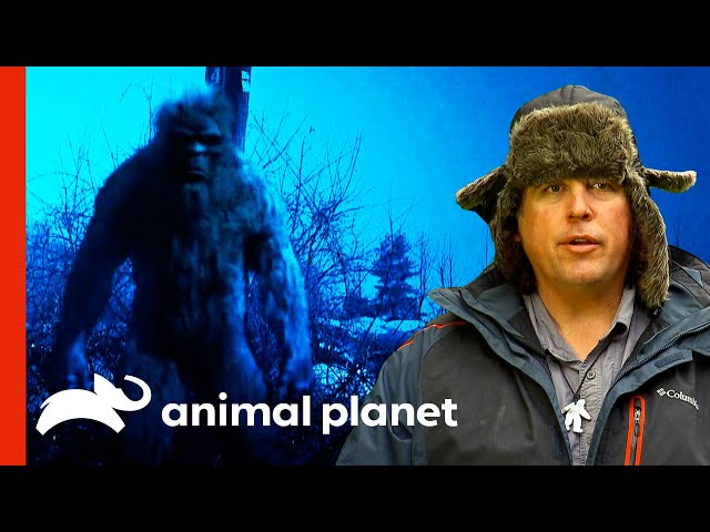 Bigfoot Expert Talks About Several Sasquatch Sightings | Finding Bigfoot