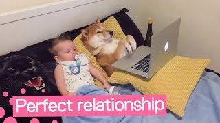 柴犬と赤ちゃんがまったりと動画鑑賞する様子に癒される