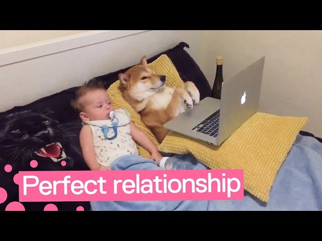 Dog and Baby Watch TV Together | Adorable Friendship ?