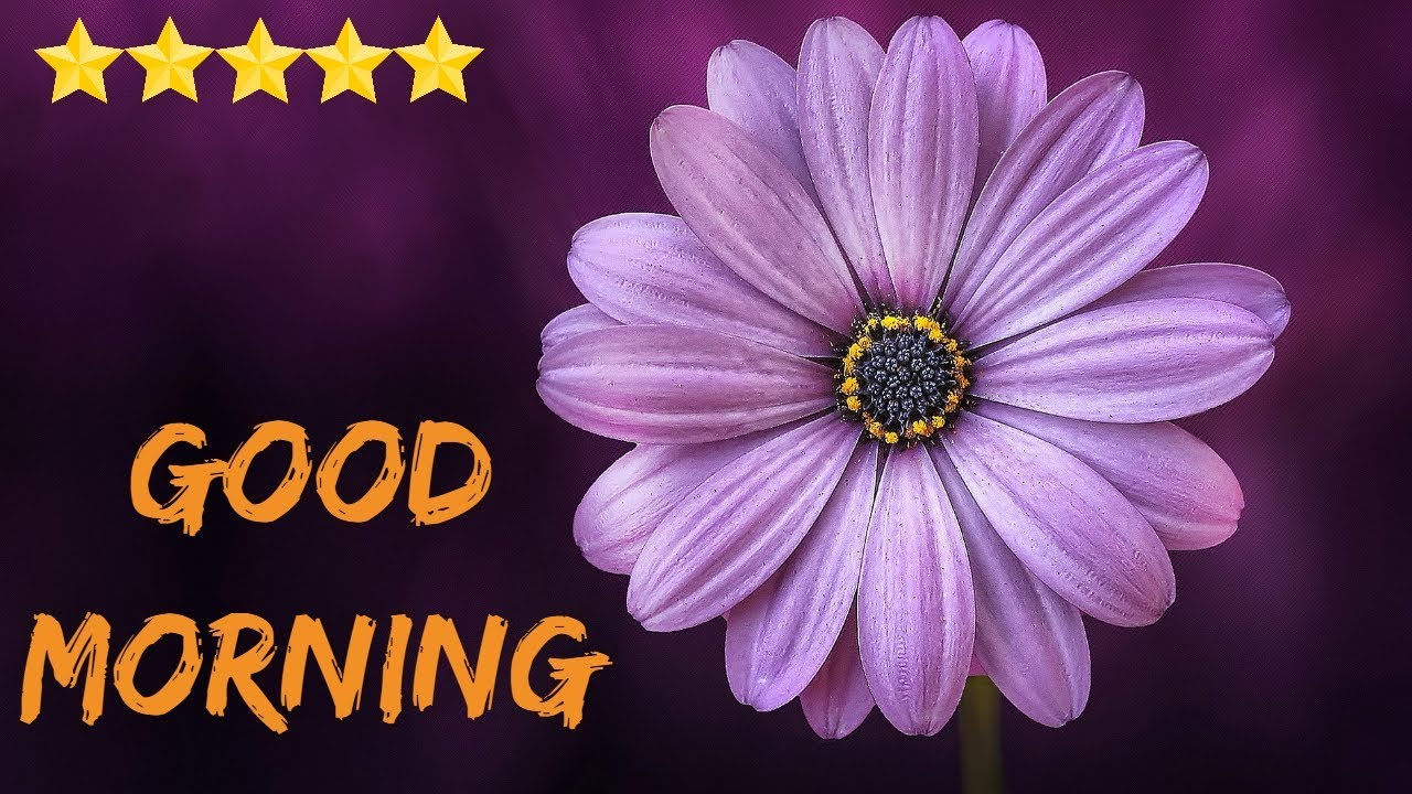 Good Morning Video Wishes Images Gm Pic Motivation Inspiration Quotes Hindi