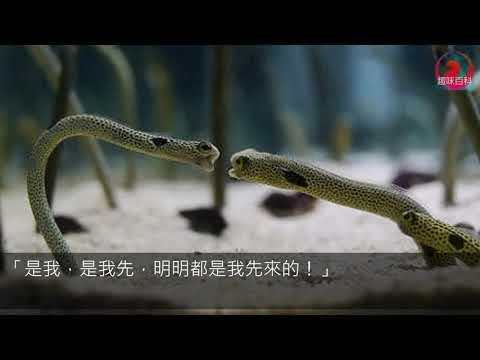 史上最無力「花園鰻吵架」可愛到炸 牠還「1vs3」網被萌翻:看這個可以看很久~