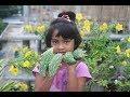 Village Food | Korlla ar macher jhol by grandmother