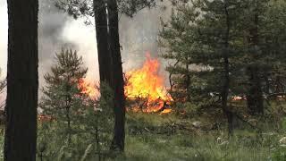 Pożar lasu w gminie Przykona