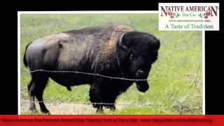 South Dakota Buffalo Hunt Interview With Guide Terry Ides - Part 2: 3000lb Bull And Tax Deduction