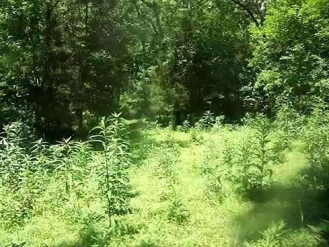 My 200 Acre KY Farm That I Have For Deer Lease