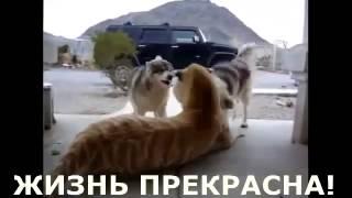 Дикие животные, которые стали друзьями человека   YouTube