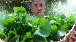 Healthy Village Foods – Pennywort Salad prepared in my Village by Grandma