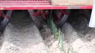 PORY sadzenie sadzarka 6 rzędową