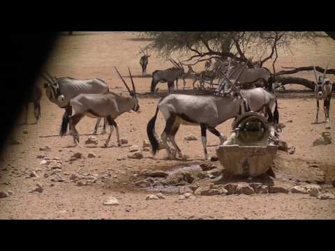 45 BOW KILLS IN 3 MINUTES — Bow Hunting Africa