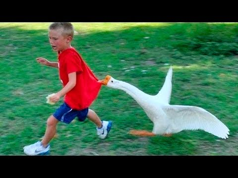 Top 200 Highlights of Animals on Vine - FUNNY Animals