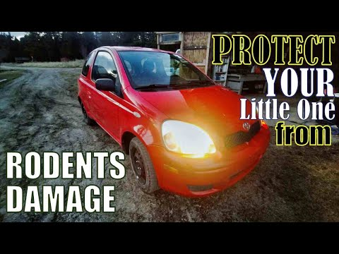 PROTECT YOUR VEHICLE FROM RODENTS DAMAGE. WE SOLVED IT. #pistonshack #rodents #peppermint #mice