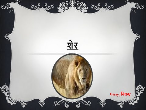 hindi essay on lion for kids शेर पर निबंध  hindi essay on lion for kids शेर पर निबंध