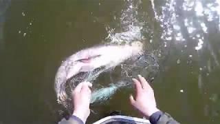 Ловля рыбы сетями на частном водойоме весной 1 часть...
