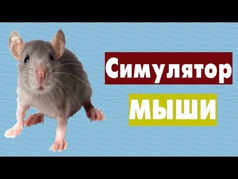 Видео Симулятор мыши смотреть онлайн