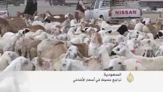تراجع ملحوظ في أسعار الأضاحي بالسعودية