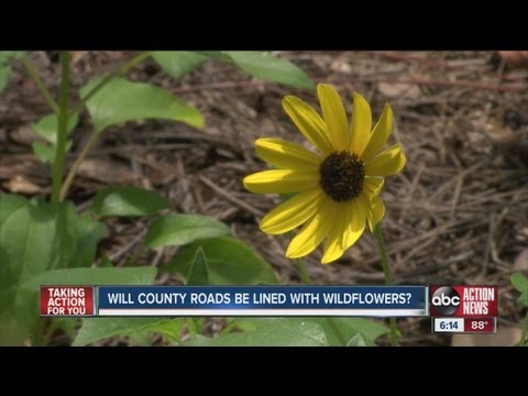 County Commissioner promotes the spread of wildflowers in Hillsborough
