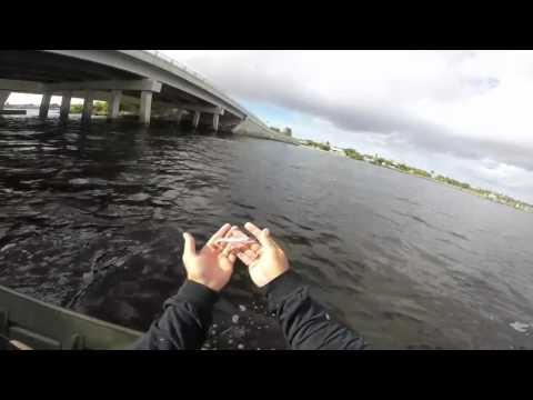 Stuart, Florida Spinnerbait Bluefish Bridge Fishing