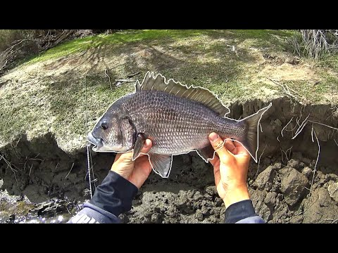 Creek FULL Of Bream On Kangaroo Island - Fishing With Soft Plastic Lures
