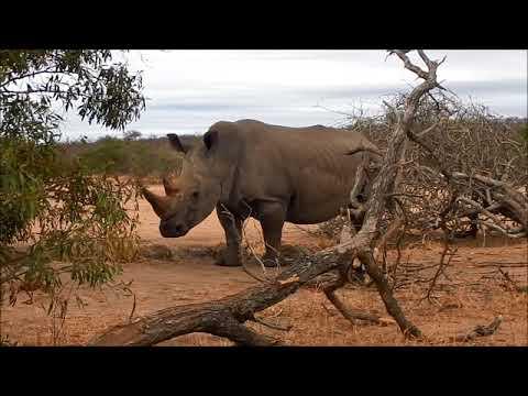 Zambia-South Africa Trip