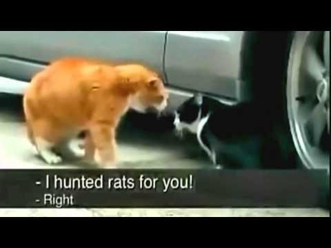 Catfight thumbnail