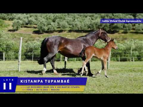 LOTE 11 - Kistampa Tupambaé