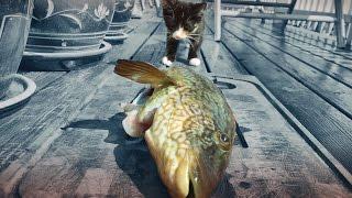 KITTEN LEARNING HOW TO FISH - Emma The Kitten