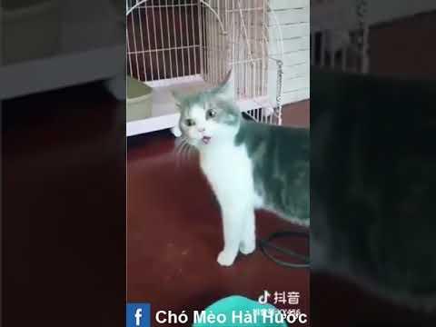 [Love TikTok] Pet Funny Best funny Dog Video Cat Funny 7
