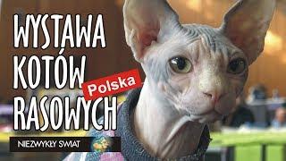 Baixar Niezwykly Swiat 4K - Międzynarodowa Wystawa Kotów Rasowych