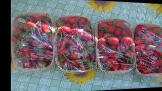 Клубника  Выращивание клубники  Рассада фриго(В данном видео показано, как приходит рассада клубники