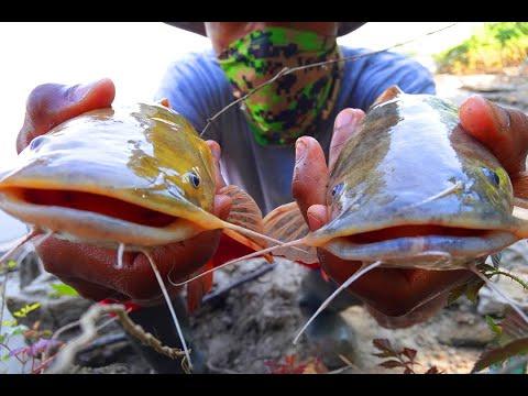 Mississippi River MUD Bank Fishing Flathead Tales
