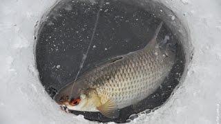видео Зимняя рыбалка