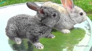 Крольчата - милые трогательные няшки