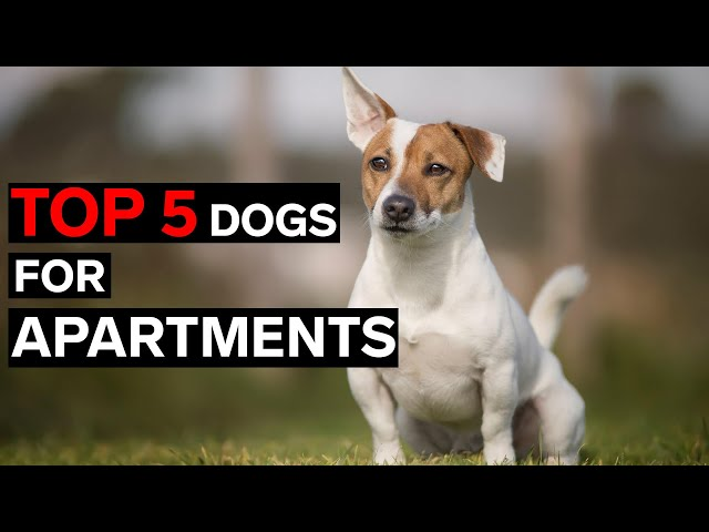 Best 5 Apartment Dogs to live with in Australia