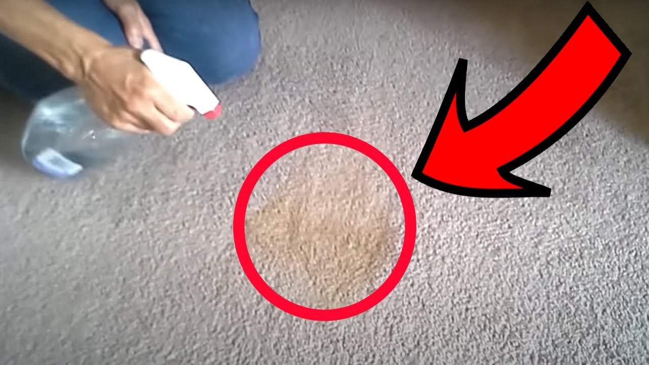 How to Get Stains Out of Carpets Using Only Vinegar - YouTube