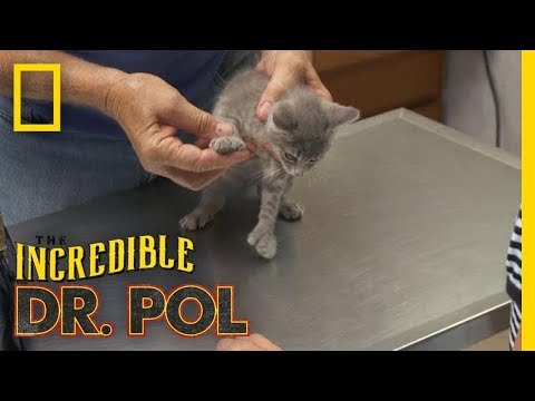 This Kitten Has Mittens | The Incredible Dr. Pol