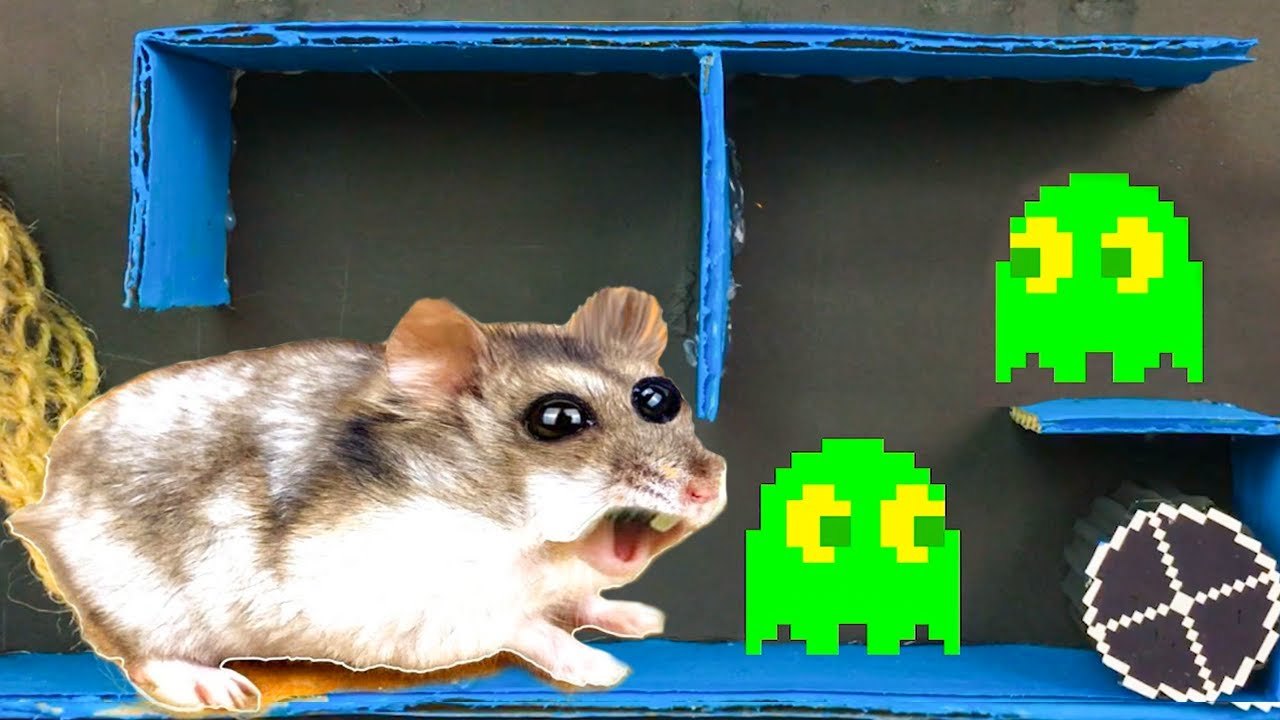 🐹 Hamster Pacman With Traps 😱[OBSTACLE COURSE]😱