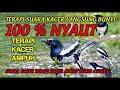 Burung Kacer Macet Bunyi Terapi Kacer Macet Bunyi Stress  Mp3 - Mp4 Download